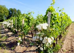 "TOTAL BORDEAUX ""GRANDS CRUS"" WINE TOUR IN 4* HOTEL - 5 DAYS / 4 NIGHTS"