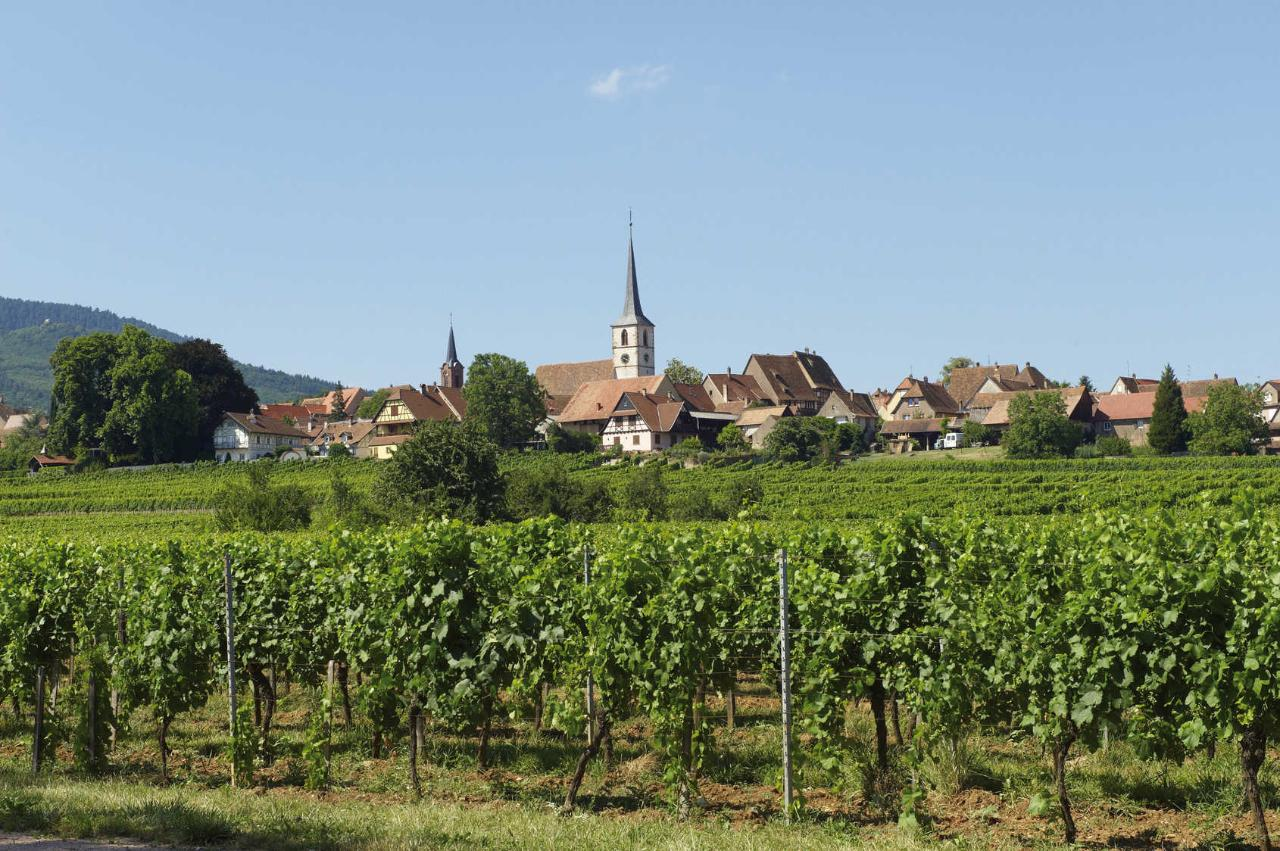 """""""GRANDS CRUS"""" WINES OF ALSACE TOUR FROM STRASBOURG"""