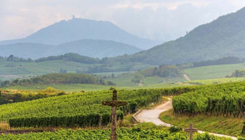 ALSACE WINE TOUR FULL DAY SHARED FROM COLMAR