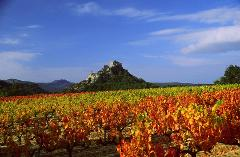 PROVENCE HALF DAY WINE TOUR FROM AVIGNON