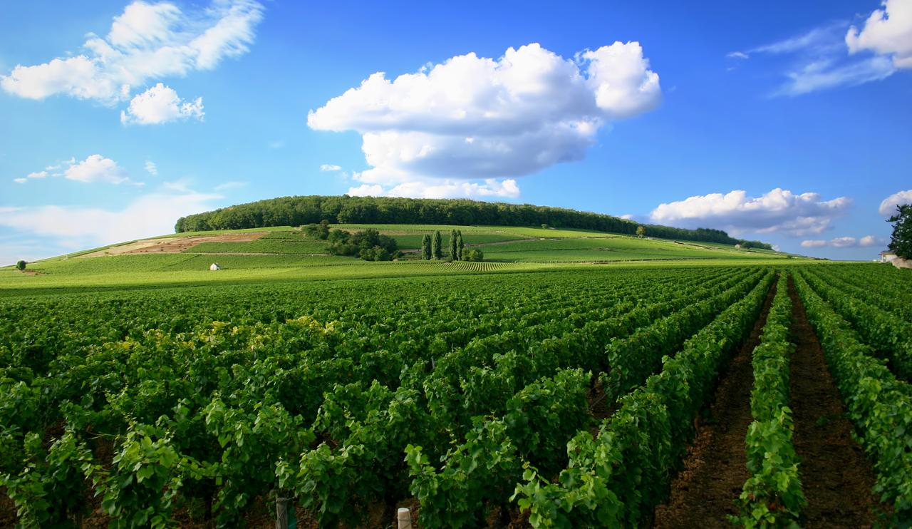 INTIMATE BURGUNDY PRIVATE WINE TOUR IN 5* HOTEL - 4 DAYS / 3 NIGHTS