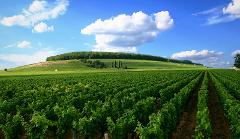4 DAYS BURGUNDY WINE TOUR PRIVATE TRAVEL PACKAGE - BEAUNE 4*