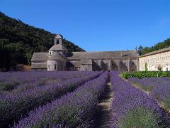 LAVENDER HALF DAY TOUR FROM AVIGNON