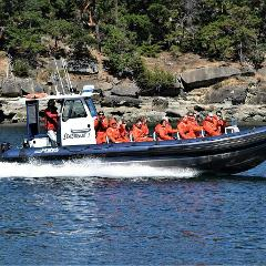 Open Zodiac-Style Whale Watching Tour