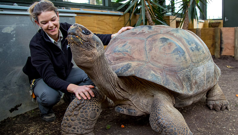 Galapagos Tortoise Experience
