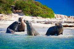Penguin & Sea Lion Cruise - Gift Voucher