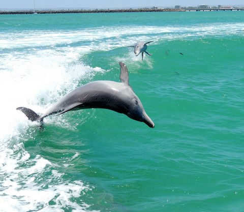Dolphin, Penguin & Sea Lion Adventure