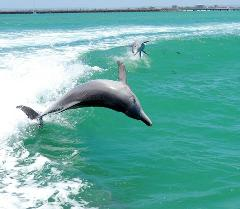 Dolphin, Penguin & Sea Lion Adventure Cruise