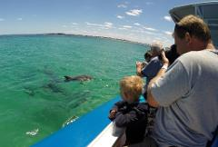 Dolphin, Penguin & Sea Lion Adventure Cruise - Gift Voucher