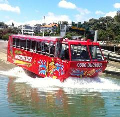 Auckland Adventure Duck
