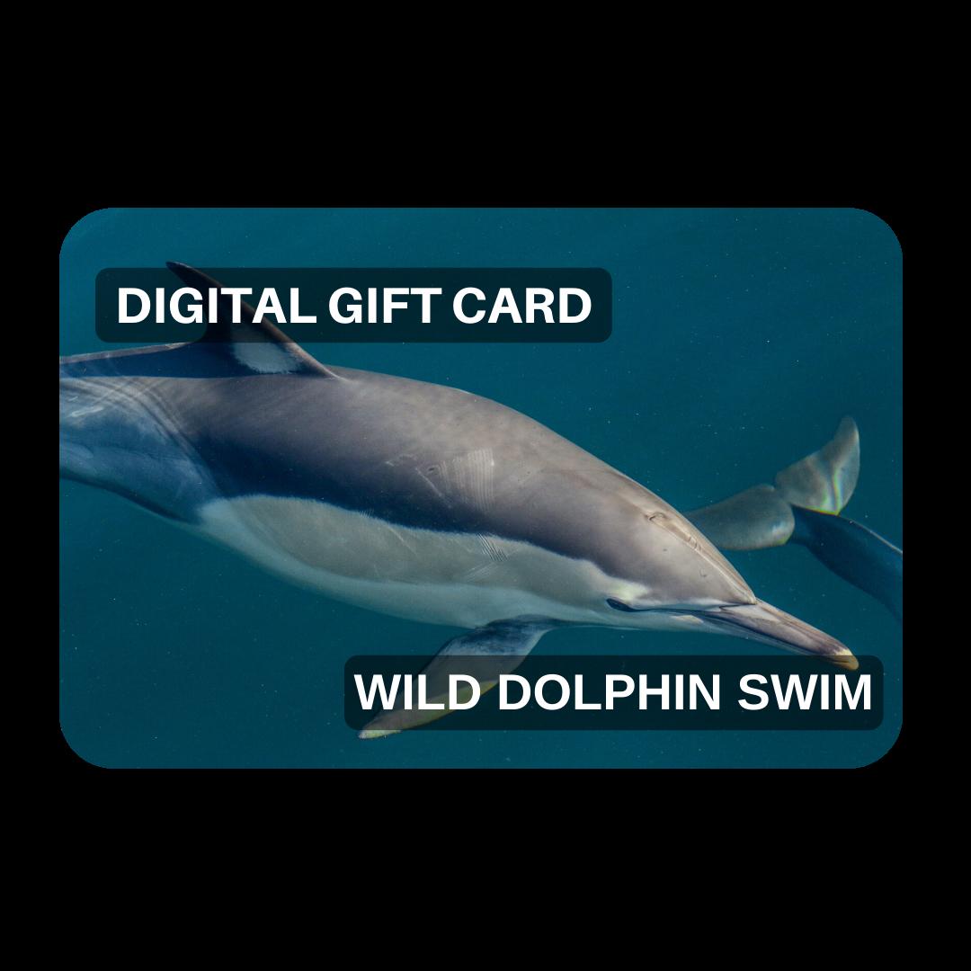 Gift Voucher - Wild Dolphin Swim