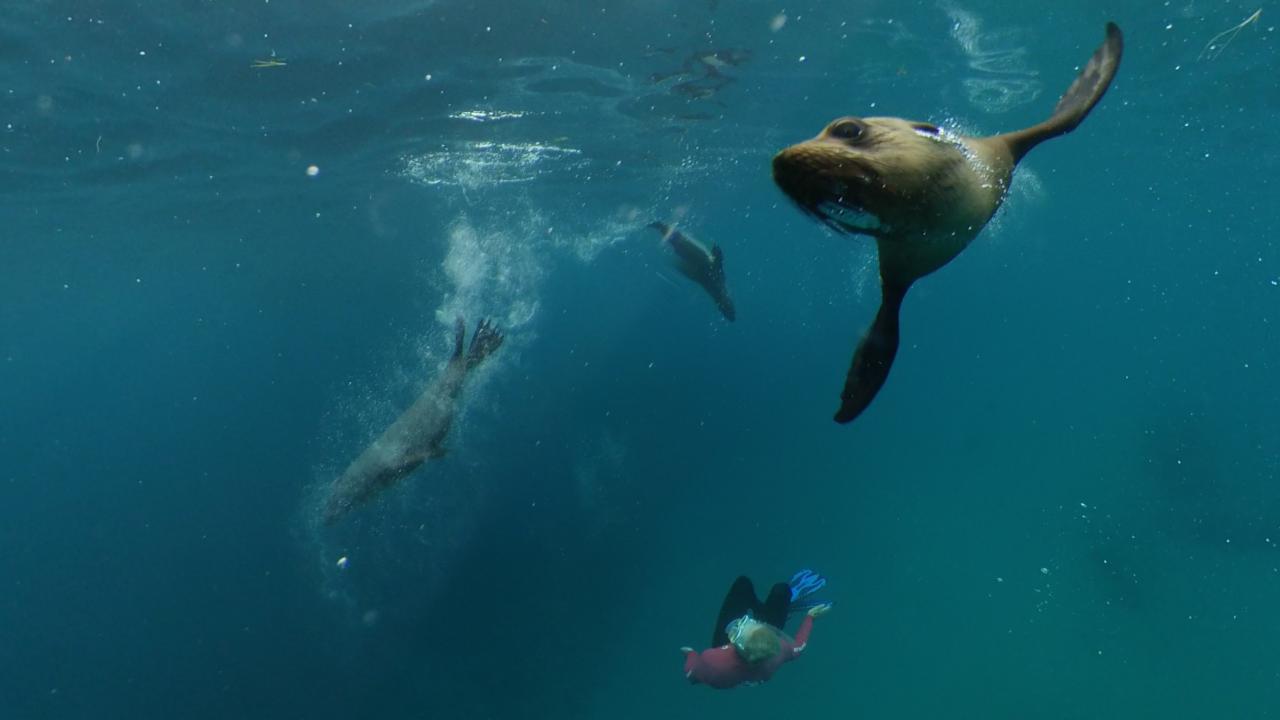 Seal Swim Adventure Tour