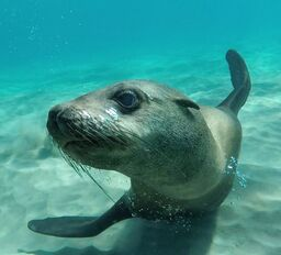 Spring Special Seal Swim
