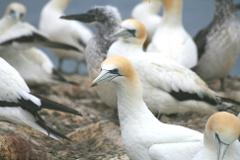 Southern Port Phillip Bay Wildlife Boat Tour & Ferry Package