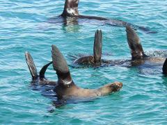 Blue Bird - Seal Swim Private Charters