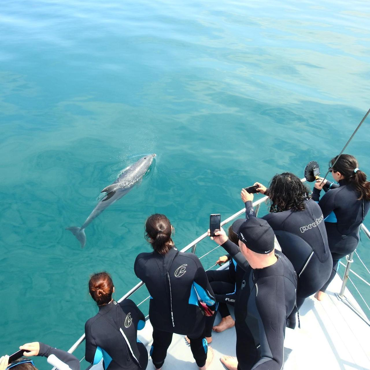 Private Charters - Large Groups Bookings