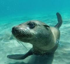 Blue Bird - Seal Swim Private Charters