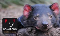 Mt Wellington & Bonorong  Wild Sanctuary