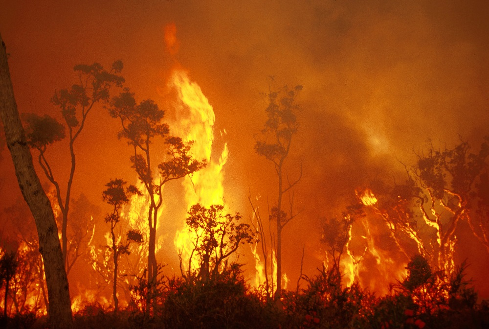 Tasmanian bush fire appeal - Contribution