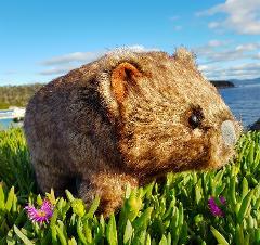 Spirit Of Maria - Plush Toy Wombat (40cm)