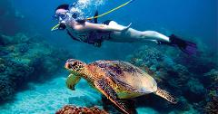Feb 04, 2019 -  5 Day Cozumel & Yucatan Cruise - 3 Guests
