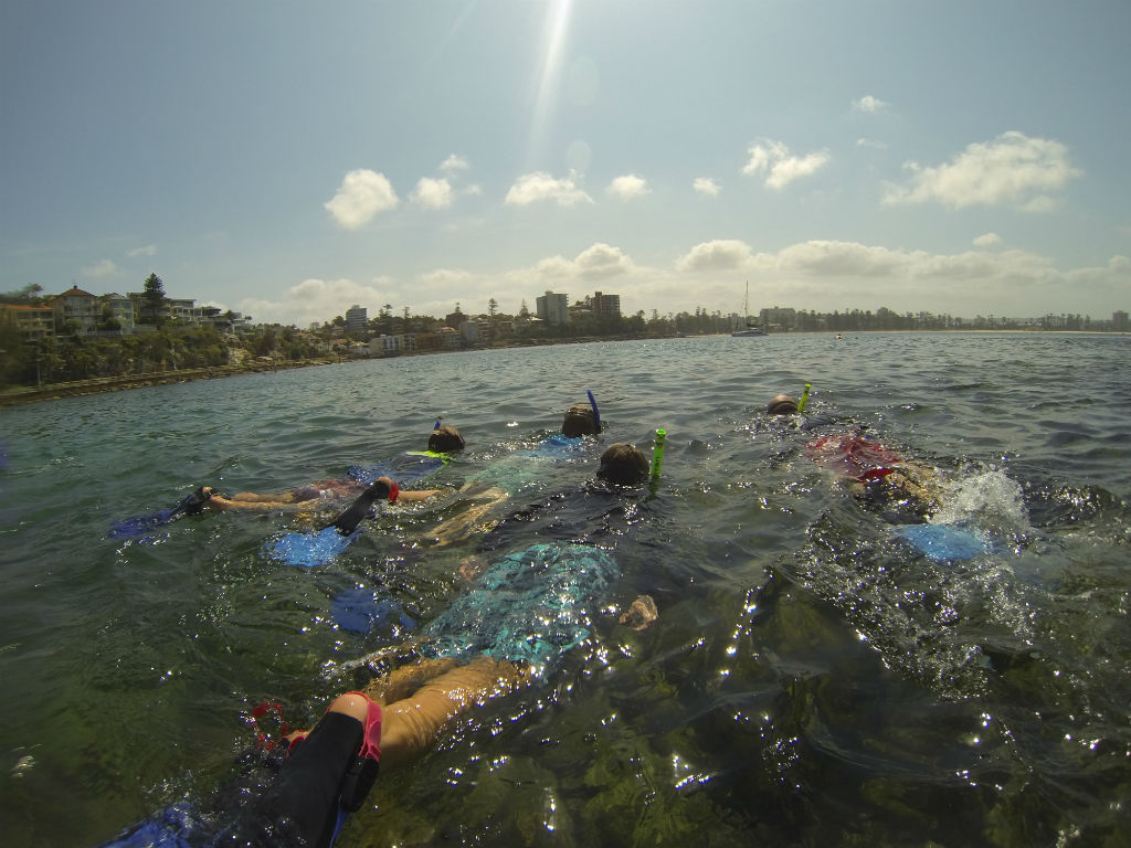 Private Tour - Manly Snorkel Walk and Talk Tour