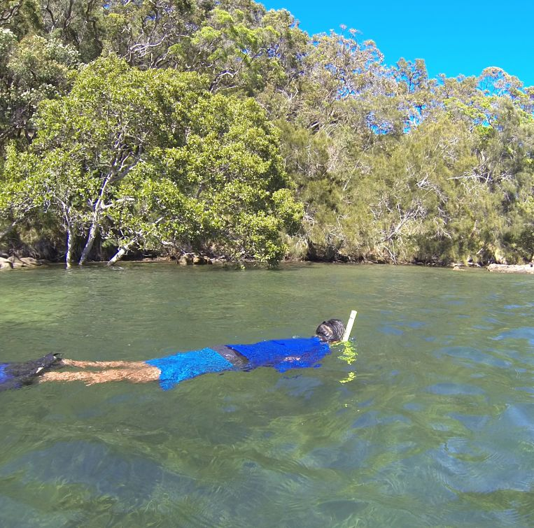 Basin Snorkel for Seas Horses - Ku-ring-gai Chase National Park