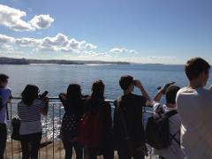 Whale Coastal Walk - Manly & North Head