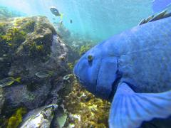 2hr Manly Snorkel Walk and Talk Tour