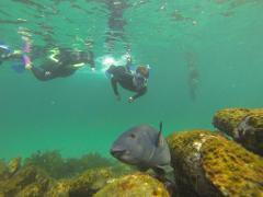Manly Snorkel Walk and Talk Tour - Group Tour