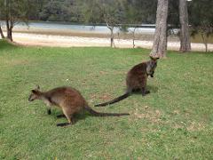 Sydney to Ku-ring-gai Chase Wildlife Adventure