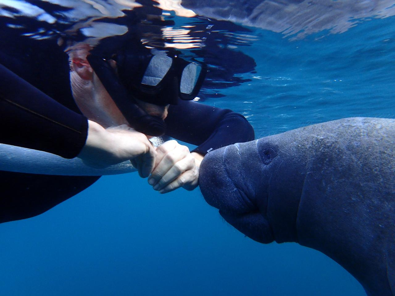 Semi-Private VIP Manatee Tour - Blue Water Deluxe (4 hr Heated) - Homosassa