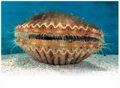 Sensational Scalloping Collective - Semi-Private 6 Passenger Vessel
