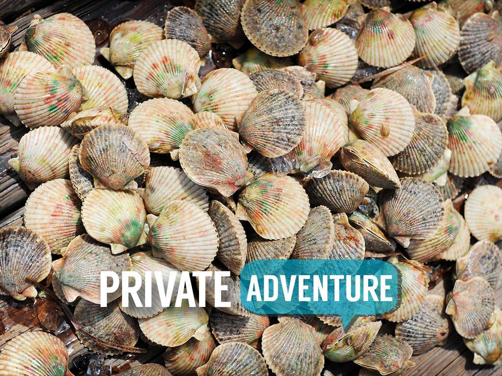Private Scallop Quest - 6 Passenger Vessel - Homosassa