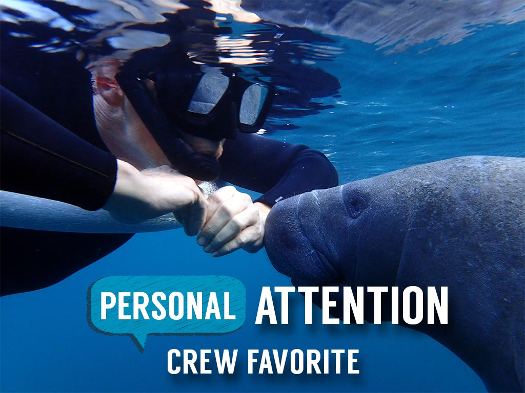 Semi-Private or Private VIP Manatee Tour - Blue Water Deluxe (4 hr Heated) - Homosassa