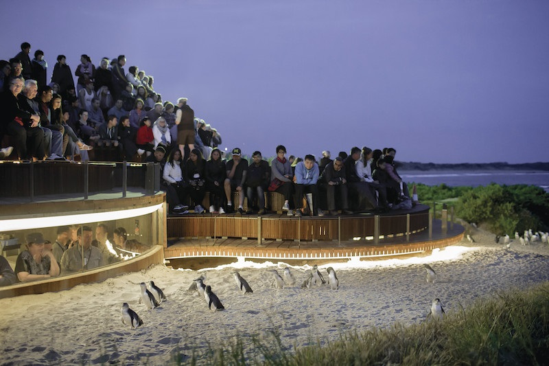 Penguins, Food and Wine Journey-Private