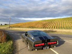 Extended Luxury Winery Cruise From Melbourne CBD to Yarra Valley in Shelby Mustang or Jaguar – 6 Hours