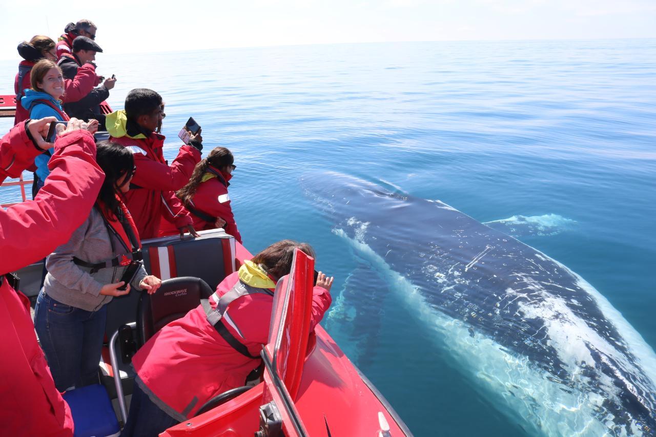 Whale Watching Safari Dunsborough