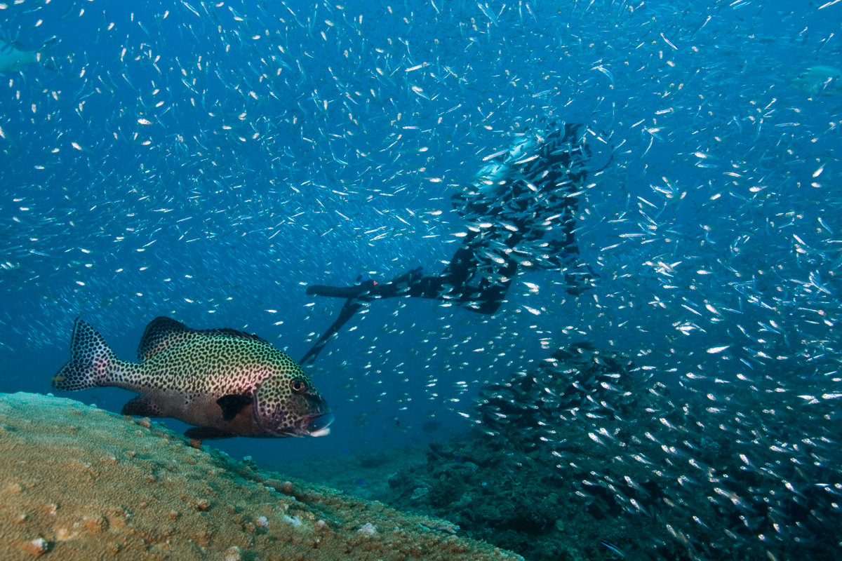 Discover SCUBA Experience Ningaloo Reef