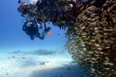 Ningaloo Reef Double Dive Tour