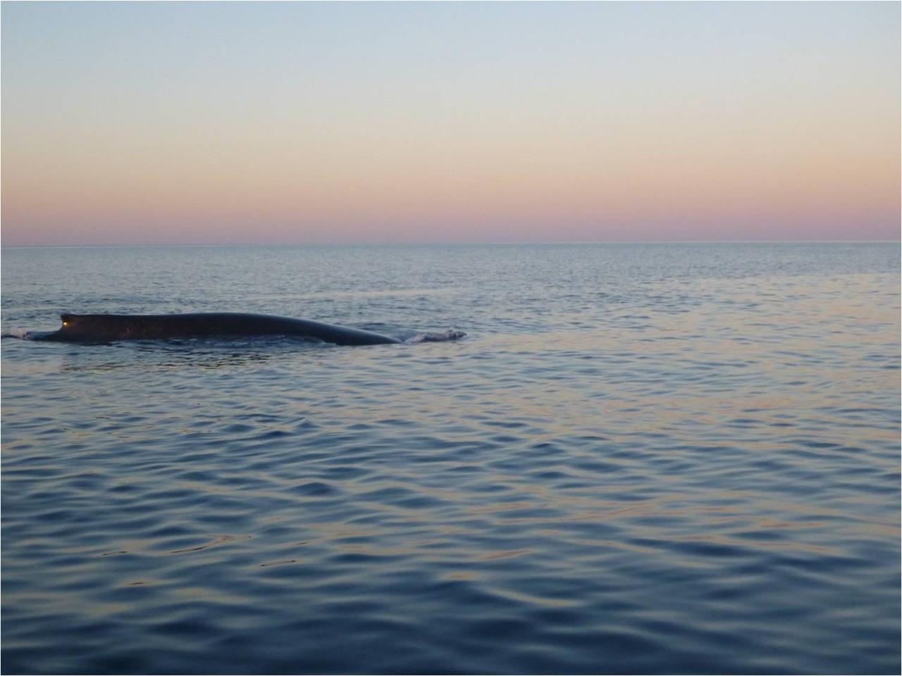 Sunset Whale Watching Tour