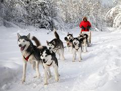 Dog Sledding and Winter Cookout