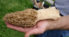 Urban Mushroom Forage