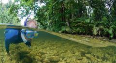 Drift Snorkeling and Mossman hike