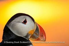 Puffin & Seabird Tour
