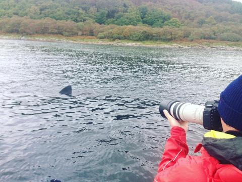 Basking Shark Research Expeditions (3 DAY)
