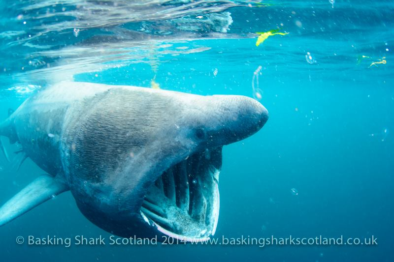 One Day Basking Shark Tour