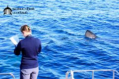 Autumn Basking Shark Research & Adventures
