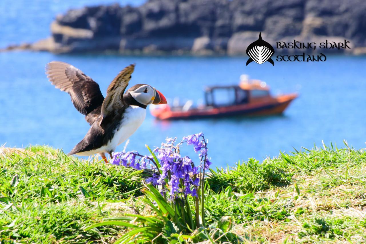 Puffin & Seabird Tour