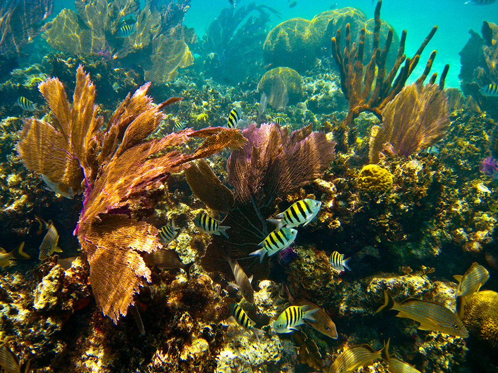 GIFT CERTIFICATE Private Group Island Snorkel - Half Day (5-10 people)